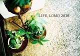 『LIFE』LOMOグループ写真展2016