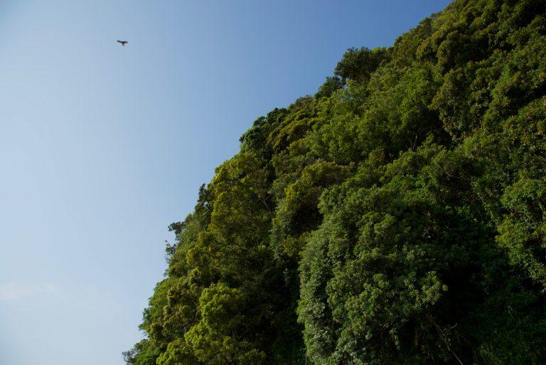 星野直人写真展「SARUSHIMA 〜都会の無人島〜」#03