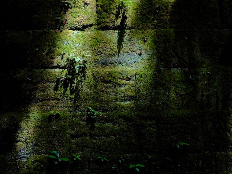 星野直人写真展「SARUSHIMA 〜都会の無人島〜」#04