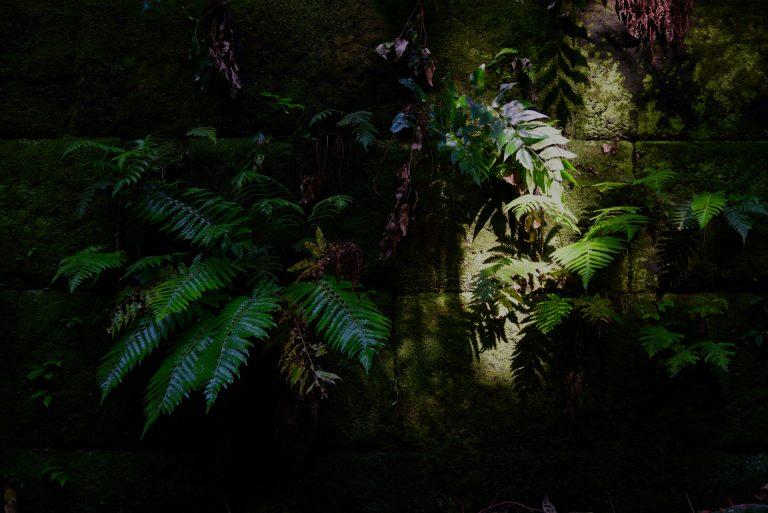 星野直人写真展「SARUSHIMA 〜都会の無人島〜」#05